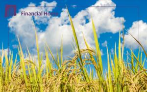 pożyczka pod zastaw da rolników